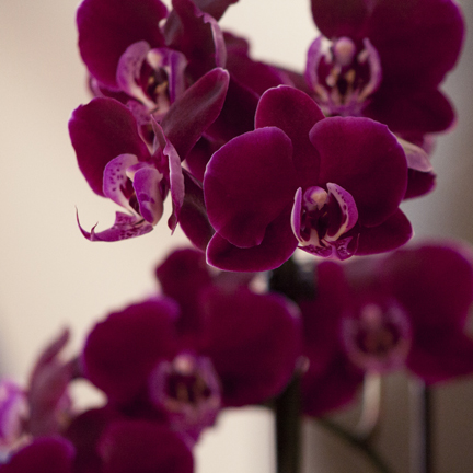 You've just been given an orchid. Now what?